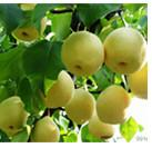 Fruit Tree Insecticide Clofentezine 10% WP 25% SC acaricide CAS 74115-24-5