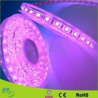 Yellow / Red / Green Waterproof Led Rope Lights 120leds/M Led Strips Manufactures