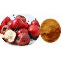China best price 10:1 20:1 Hawthorn Extract /hawthorn berry Maslinic Acid manufactured in China on sale