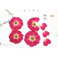 Red Rose Real Pressed Flowers Diameter 3 CM For Valentine'S Day Holidays Manufactures