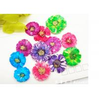 Small Daisy Natural Real Pressed Flowers True Plants Specimens For DIY Photo Frame Manufactures