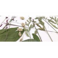 Original Wild Grass Weed Large Pressed Flowers For Aroma Wax Candles Manufactures