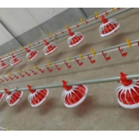 Automatic Complete Broiler Pan Feeding System Manufactures