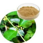 Gymnema Extract Gymnemic acids 25%,Weight loss, reduce blood glucose and blood sugar
