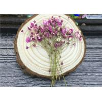 DIY Handmade Long Dried Flowers , Babys Breath Materials Real Dried Flowers Manufactures