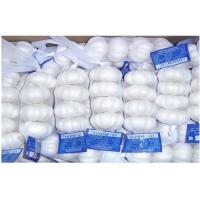 China Pure White Organic Fresh Garlic Fresh For Cooking , Medicinal 4.5cm - 6.5cm, Strong bactericidal on sale