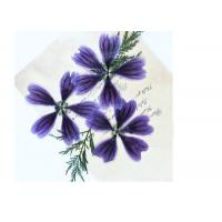 Dark Purple Dried Hollyhock Flowers , Pressed Flower Artwork For Aroma Wax Tablets Manufactures