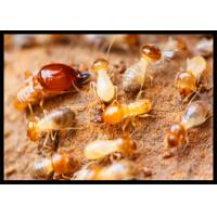 High Effect Professional Termite Treatment CAS 120068-37-3 Fipronil 0.5% DP Manufactures