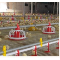 ABS Complete Auto 20kg Poultry House Equipment Manufactures