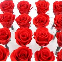 Red Real Forever Rose , Real Flowers That Last Forever For Wedding Decoration Manufactures