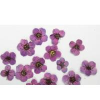 Purple Colour Narcissus Dried Flower Nail Art For DIY Nail Accessories Manufactures