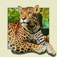 5d Animal Collage Poster Of 15.7x15.7 Inches Custom Lenticular Printing For Gift. Manufactures