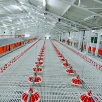 Durable Chicken Duckling Poultry Slat Flooring Manufactures