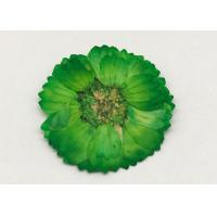 Dye Green Dried Flowers , Dried Daisy Flowers For Epoxy Recycled Flowers Manufactures