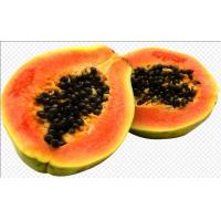 Papain super purity protease purified from papaya fruit, food enzymes Manufactures