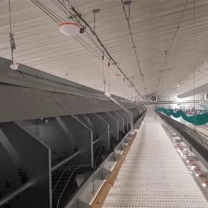 Chain Feeding System Chicken Breeding Equipment Manufactures