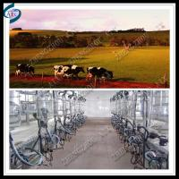 China high efficiency cow herringbone milking parlour on sale