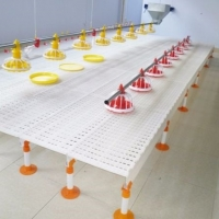 Chicken Farm Plastic Slatted Flooring For Sheep Manufactures