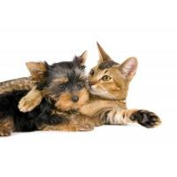 pets dog and cat giclee