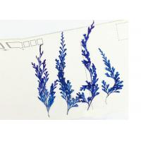Fern Leaves Real Dried Flowers / Pressed Flower Framed Art 6 Different Colors Manufactures