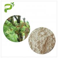 China Water Solvent Bayberry Bark Extract Powder , Myricetin Anti Inflammatory Supplements on sale
