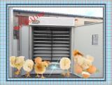 (264) eggs incubators