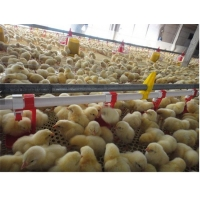 Broiler Automatic Poultry Drinker Nipple Cup Drinker System Manufactures