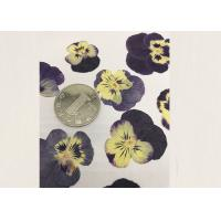 Purple Pansy Real Pressed Flowers True Plant Material For Press Picture Ornaments Manufactures