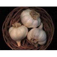 China Vitamin Garlic Extract on sale