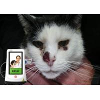 Dogs Cats Pets Therapy Veterinary Laser Equipment , Veterinary Cold Laser Therapy Machine Manufactures