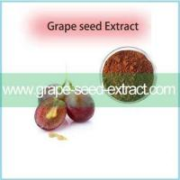 Best Pirce Grape Seed Extract Of Resveratrol CAS 501-36-0 With Excellent Quality Manufactures