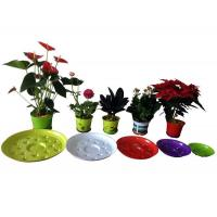 Star tray Manufactures