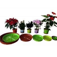 shallow tray Manufactures