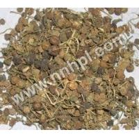 Pitpapra Extract Manufactures