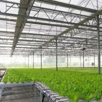 Greenhouse NFT Hydroponic Growing System for Tomato and Lettuce Manufactures