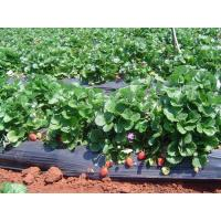 Cheap Mulching Film For Fruits for sale
