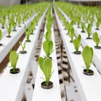 Agricultural Greenhouse Flat Hydroponics commercial hydroponics Manufactures
