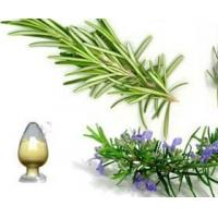 Cheap Rosemary extract for sale