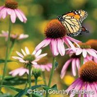 1 OZ. Butterfly and Bird Wildflower Seed Mix