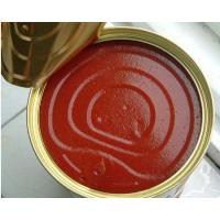 Tomato Paste11111 Ketchup Manufactures