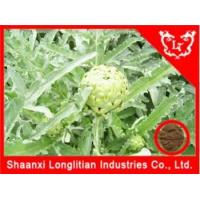 Liver & Lung Health Artichoke extract cynarin Manufactures