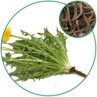 Dandelion Root(Taraxacum Officinale Root),Chinese Herbal Medicine for Tea Granules and Pharmacy